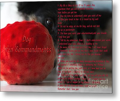 Dog Ten Commandments Metal Print by Stelios Kleanthous
