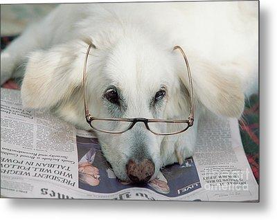 Dog And The News Metal Print by Yva Momatiuk John Eastcott