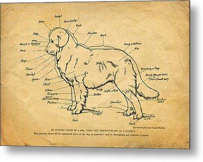 Doggy Diagram Metal Print by Tom Mc Nemar