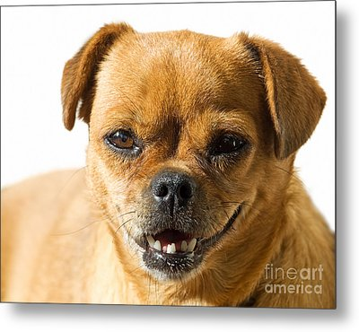 Doggy Portrait Metal Print by Sinisa Botas