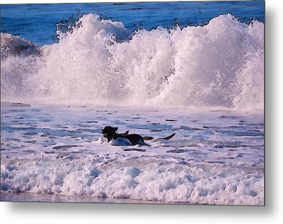 Dogs At Carmel California Beach Metal Print