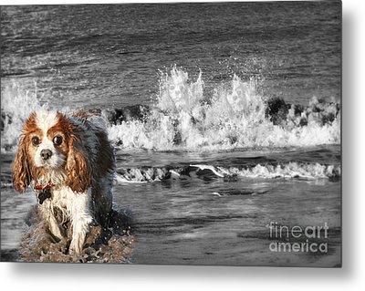 Dogs Enjoying The Sea Metal Print by Jo Collins