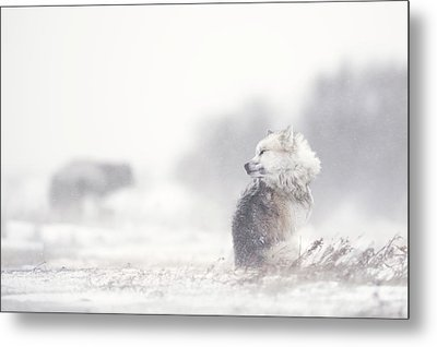Dogs In The Storm Metal Print