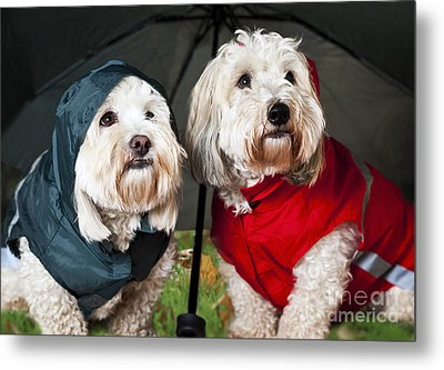 Dogs Under Umbrella Metal Print