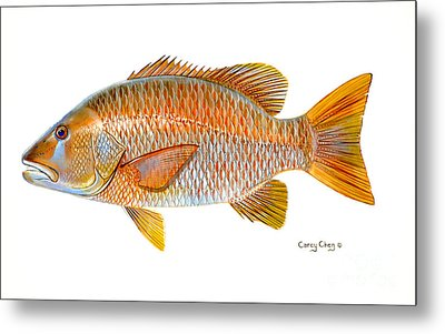 Dogtooth Snapper Metal Print by Carey Chen