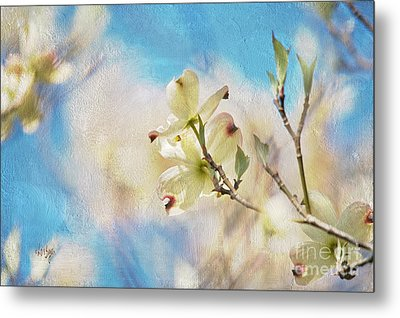 Dogwood Against Blue Sky Metal Print by Lois Bryan