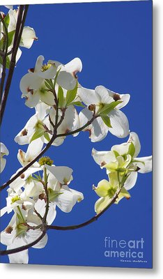 Metal Print featuring the photograph Dogwood Beauty by Tannis  Baldwin