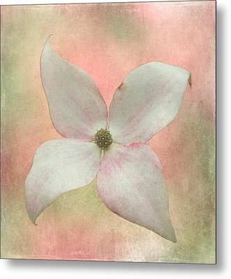 Dogwood Blossom Metal Print by Angie Vogel