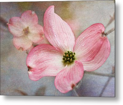 Dogwood Blossoms Metal Print by Angie Vogel