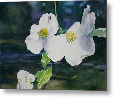 Dogwood Blossoms Metal Print by Christopher Reid