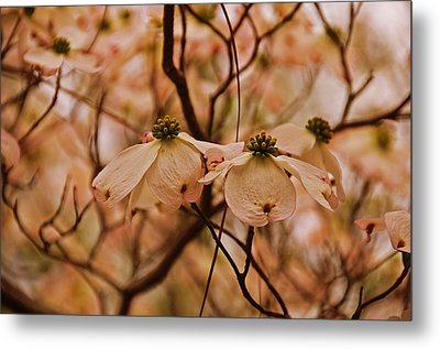 Metal Print featuring the photograph Dogwood Day Afternoon by John Harding