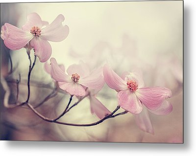 Dogwood Metal Print by Magda  Bognar