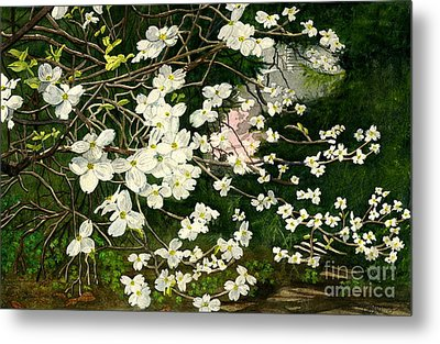 Metal Print featuring the painting Dogwoods Virginia by Melly Terpening