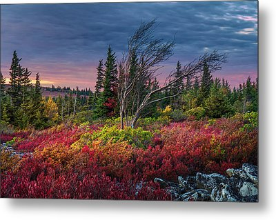 Dolly Sods Windswept Sunset Metal Print