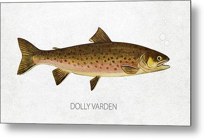 Dolly Varden Metal Print by Aged Pixel