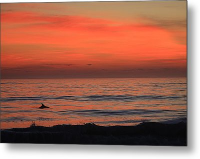 Dolphin At Cape Hatteras Metal Print by Mountains to the Sea Photo
