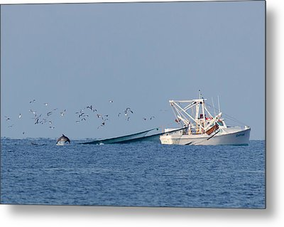 Dolphin Chase Metal Print