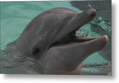 Dolphin Metal Print by Dervent Wiltshire
