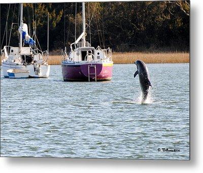 Dolphin In Taylors Creek Metal Print