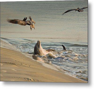 Dolphin Joy Metal Print