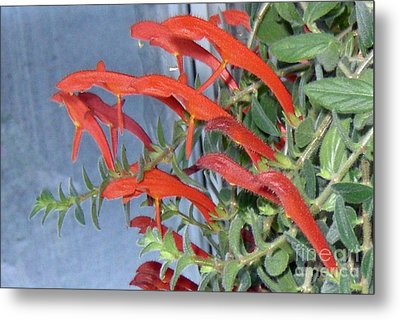 Metal Print featuring the photograph Dolphin Plant by Brenda Brown