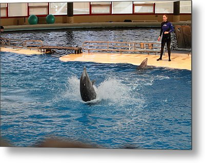 Dolphin Show - National Aquarium In Baltimore Md - 1212102 Metal Print by DC Photographer