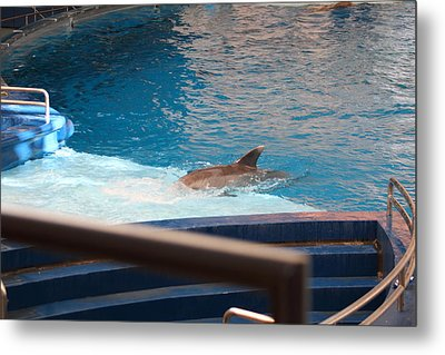 Dolphin Show - National Aquarium In Baltimore Md - 1212103 Metal Print by DC Photographer