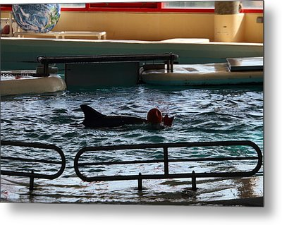 Dolphin Show - National Aquarium In Baltimore Md - 1212111 Metal Print by DC Photographer
