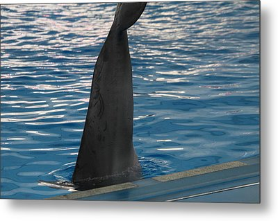 Dolphin Show - National Aquarium In Baltimore Md - 1212126 Metal Print
