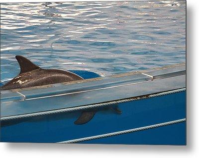 Dolphin Show - National Aquarium In Baltimore Md - 121213 Metal Print