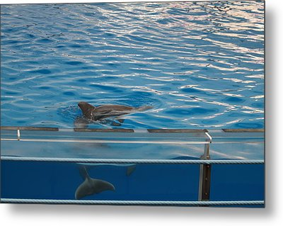 Dolphin Show - National Aquarium In Baltimore Md - 121216 Metal Print by DC Photographer
