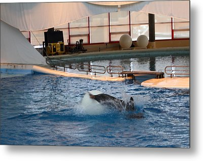 Dolphin Show - National Aquarium In Baltimore Md - 1212167 Metal Print by DC Photographer