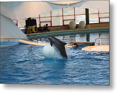 Dolphin Show - National Aquarium In Baltimore Md - 1212168 Metal Print by DC Photographer
