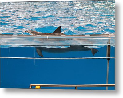Dolphin Show - National Aquarium In Baltimore Md - 1212173 Metal Print by DC Photographer