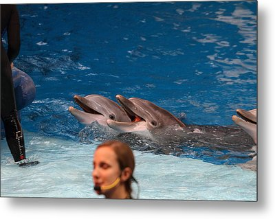 Dolphin Show - National Aquarium In Baltimore Md - 1212176 Metal Print by DC Photographer