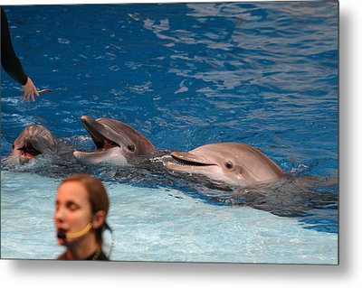 Dolphin Show - National Aquarium In Baltimore Md - 1212177 Metal Print by DC Photographer