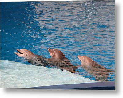 Dolphin Show - National Aquarium In Baltimore Md - 1212183 Metal Print by DC Photographer