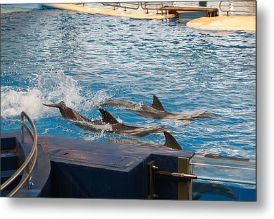 Dolphin Show - National Aquarium In Baltimore Md - 1212187 Metal Print