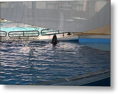 Dolphin Show - National Aquarium In Baltimore Md - 121219 Metal Print by DC Photographer