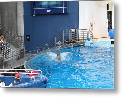 Dolphin Show - National Aquarium In Baltimore Md - 1212204 Metal Print by DC Photographer