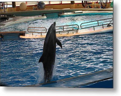Dolphin Show - National Aquarium In Baltimore Md - 1212209 Metal Print by DC Photographer