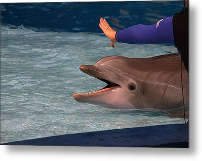 Dolphin Show - National Aquarium In Baltimore Md - 1212220 Metal Print by DC Photographer