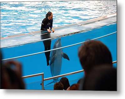 Dolphin Show - National Aquarium In Baltimore Md - 1212227 Metal Print by DC Photographer