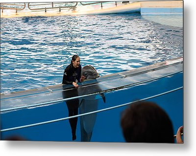 Dolphin Show - National Aquarium In Baltimore Md - 1212229 Metal Print by DC Photographer