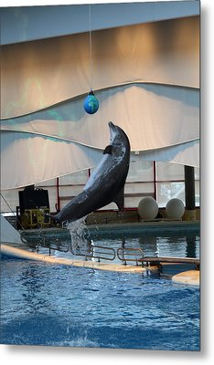 Dolphin Show - National Aquarium In Baltimore Md - 1212236 Metal Print