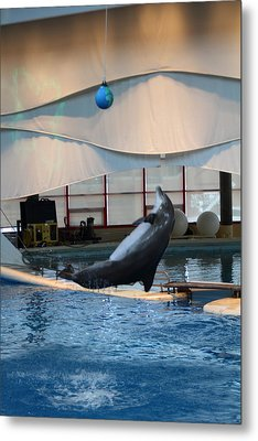 Dolphin Show - National Aquarium In Baltimore Md - 1212238 Metal Print