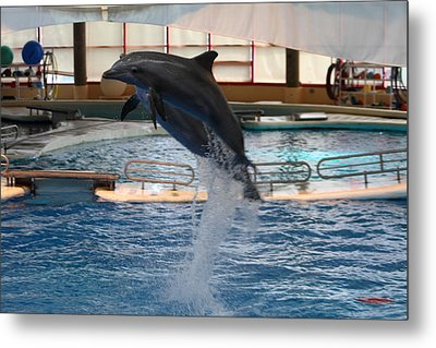 Dolphin Show - National Aquarium In Baltimore Md - 1212248 Metal Print by DC Photographer