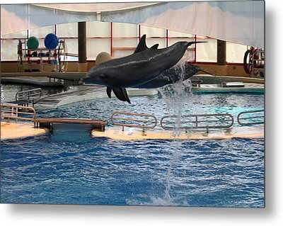 Dolphin Show - National Aquarium In Baltimore Md - 1212250 Metal Print by DC Photographer