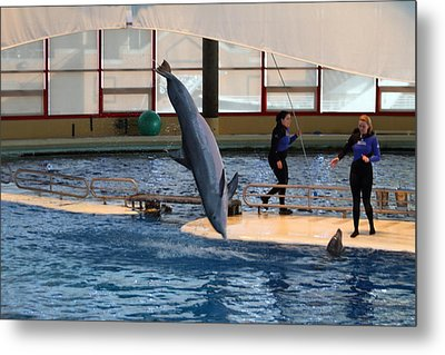 Dolphin Show - National Aquarium In Baltimore Md - 121226 Metal Print by DC Photographer