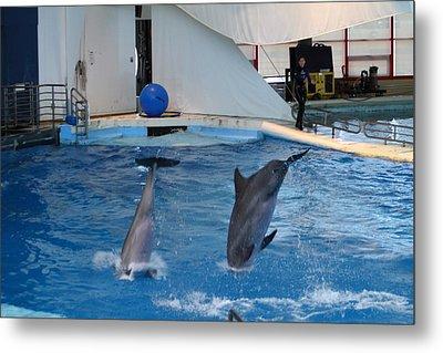 Dolphin Show - National Aquarium In Baltimore Md - 1212261 Metal Print